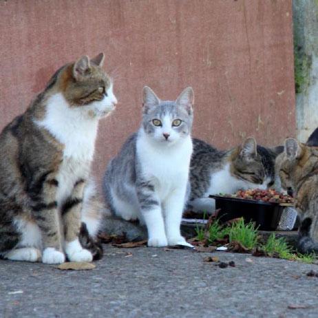 aménagement pour chats